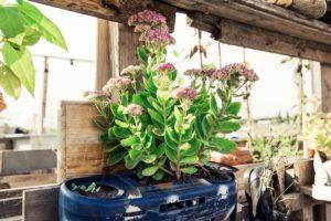 Pflanzen im Topf
